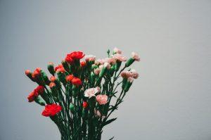 カーネーションの育て方で鉢植えの場合!地植えや花瓶では?