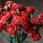 カーネーションの花言葉は?色によって意味が違うの?
