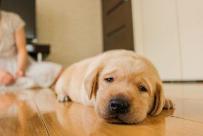 犬の夏バテ対策におススメの食事やグッズを紹介!予防法まで解説します!