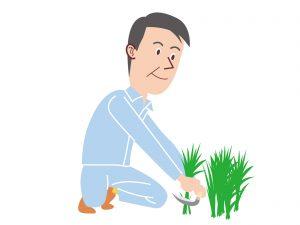 庭に生える雑草の種類と4つの対策!おススメグッズも紹介